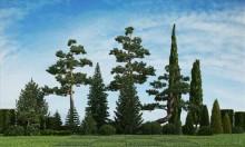 مدل درخت باغ گیاه بوته شمشاد کاج