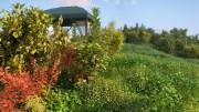مدل سه بعدی درخت گل لندسکیپ خار بوته درختچه درخت تزئینی وی ری تری دی مکس