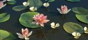 مدل سه بعدی گیاهان دریایی ارکیده برکه مرداب نی وی ری تری مکس