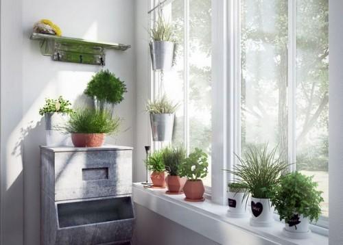 مدل گل گلدان خانگی تزئینی آپارتمانی کاکتوس