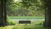 مدل سه بعدی جنگل درخت سبز تابستان بهار درخت انار