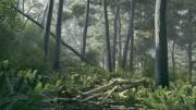 مدل سه بعدی جنگل چوب درخت تنه درخت بلوط کاج هیزم سنگ خزه