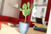 مدل سه بعدی گل گلدان بامبو بنجامین بنسای   تری دی مکس اسکچاپ آبجکت