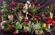 مدل سه بعدی گل گلدان تزئینی کاکتوس بنجامین   تری دی مکس اسکچاپ آبجکت
