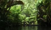 مدل سه بعدی درختان استوایی نخل   تری دی مکس اسکچاپ آبجکت