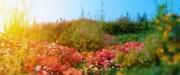 دانلود مدل سه بعدی باغچه سنگ گل بوته پارک چمن لندسکیپ شمشاد پارک وی ری تری دی مکس